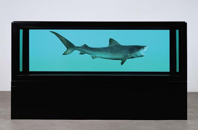 Damien Hirst - The Kingdom - 2008 - Tiger Shark
