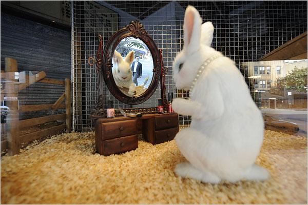 White Rabbit by Banksy