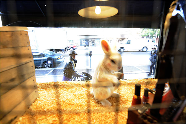 White Rabbit by Banksy, at the Village Petstore and Charcoal Grill