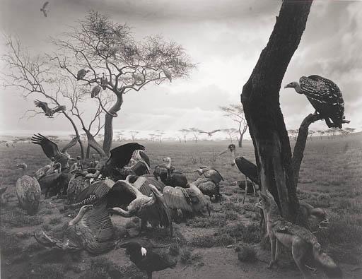 hyena-jackal-vulture-hiroshi-sugimoto