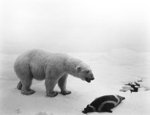 polar-bear-hiroshi-sugimoto