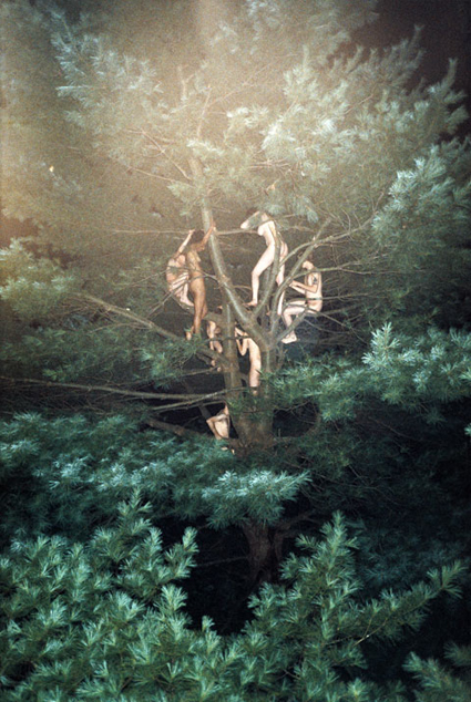 ryan-mcginley-tree-no-3-2003