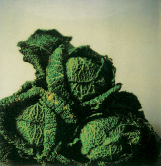 Cy Twombly, Cabbages