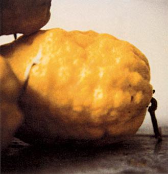 Cy Twombly, Lemons