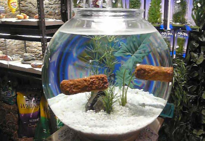 Bansky-fish tank-Bristol