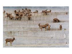 Zoologischer Garten Madrid I, Projects: Done, Candida Höfer, Museum Morsbroich
