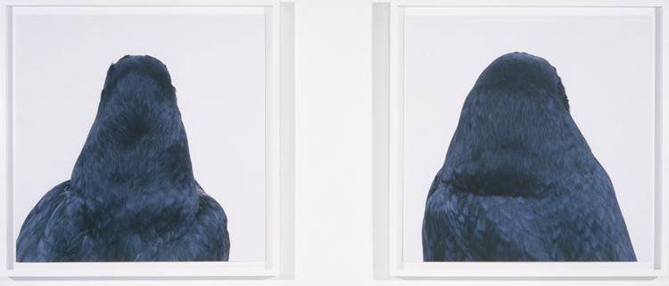 Roni Horn Bird Whitney Exhibition