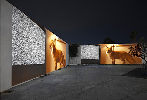 Doug Aitken  - Migration4