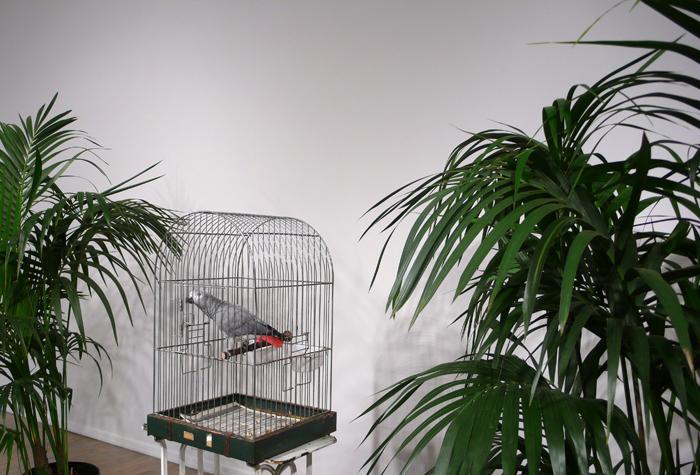 Broodthaers, Parrot btw Trees, 1974, Via Peter Freeman