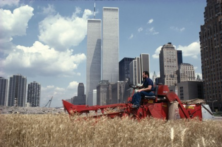 Agnes Denes Wheatfield - A Confrontation: Battery Park Landfill, Downtown Manhattan (1982), via MoMAPs1