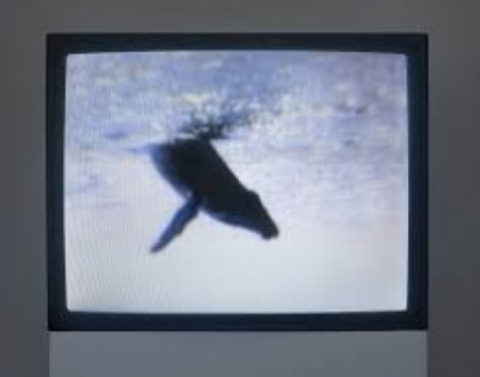Peter Coffin, One Minute Whale Breach (2005), Courtesy Hirshhorn Museum