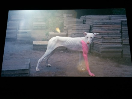 Pierre Huyghe at Centre Pompidou, via Sophie Kitching for Art Observed