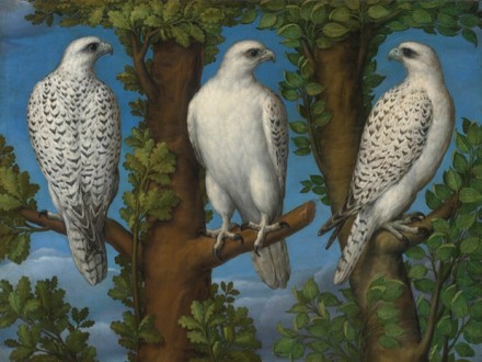 Lombard Master, Portrait of a gyrfalcon, viewed from three sides, via Sotheby's
