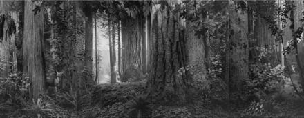 Hiroshi Sugimoto, Olympic Rainforest (2012), via Pace London