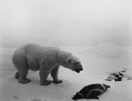Hiroshi Sugimoto, Polar Bear (1976), via Pace London