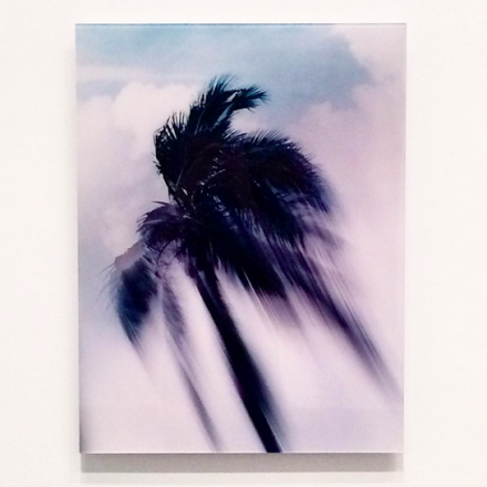 Piotr Uklanski, Untitled (Coconut Tree) (1998), via Art Observed