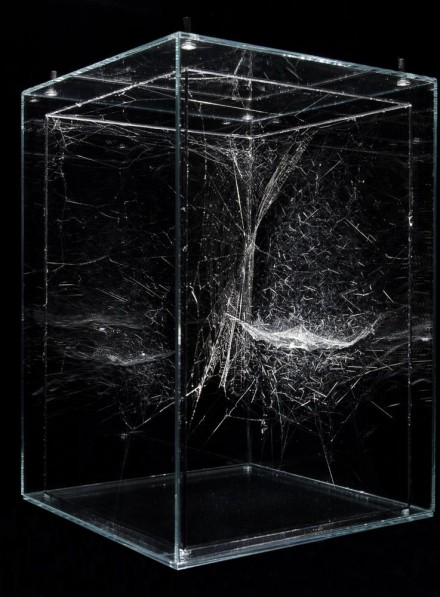 Tomás Saraceno, Hybrid solitary semi-social musical instrument Horologium: built by Argiope anasuja - one month - and a small community of Cyrtophora citricola - two weeks (2014)