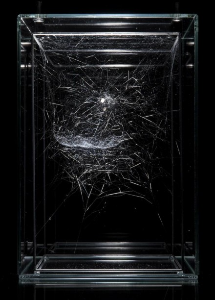 Tomás Saraceno, Hybrid solitary semi-social musical instrument Ophiuchus: built by Parasteatoda lunata - two weeks - and a Cyrtophora citricola - two weeks (2015)