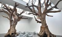 Ai Weiwei's Trees, via The Guardian