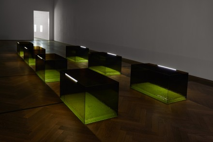 Anicka Yi, 7,070,430K of Digital Spit (Installation View), via Kunsthalle Basel